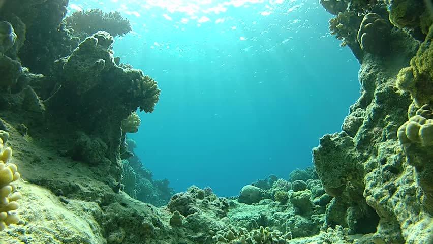 Fondo marino de la Costa Amalfitana