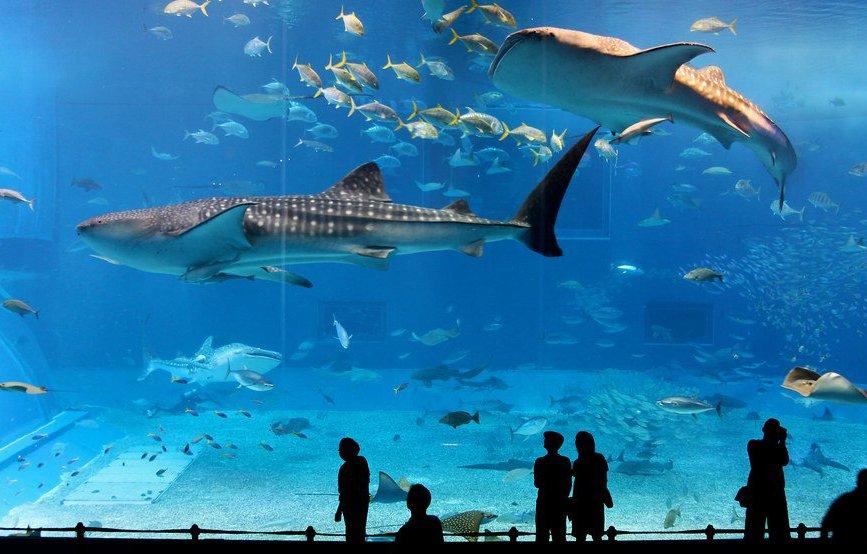 acuario-de-dubai.jpg
