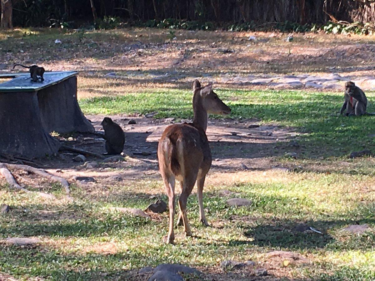 Ciervos y monos en Balekambang City Park