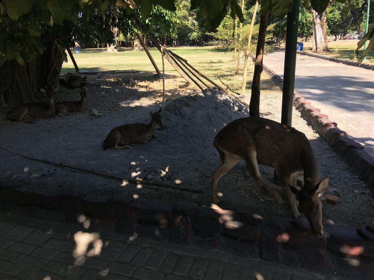 Ciervos descansando en Balekambang City Park