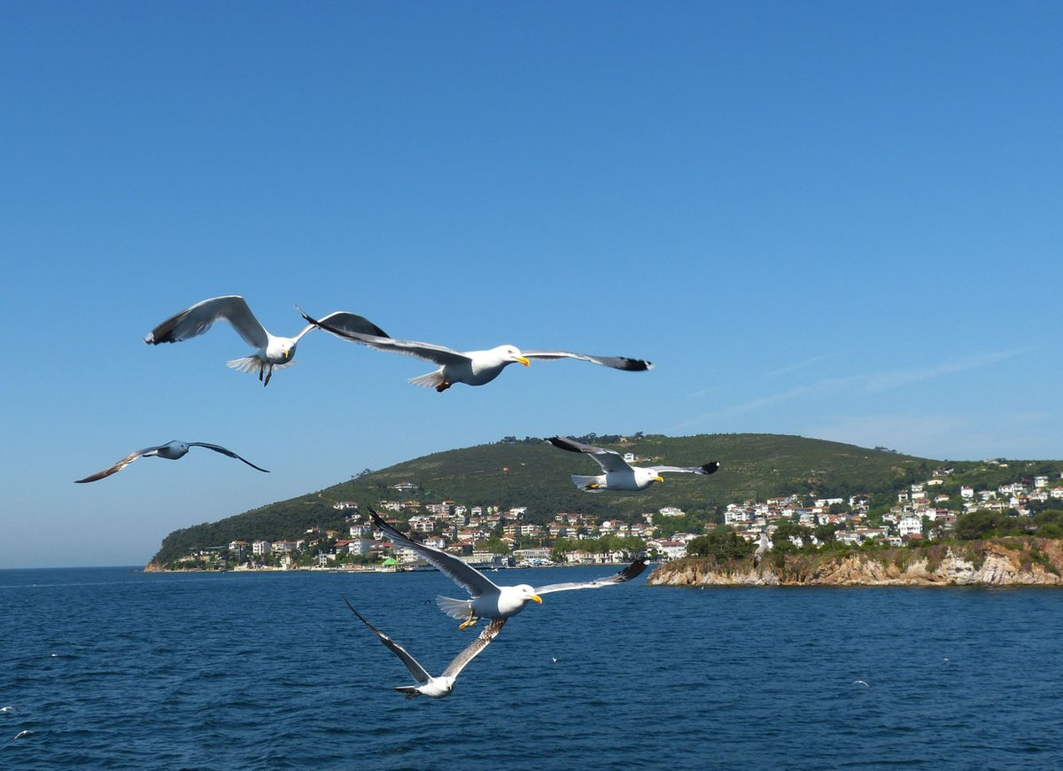 Gaviotas volando en la costa de las islas del Bósforo.