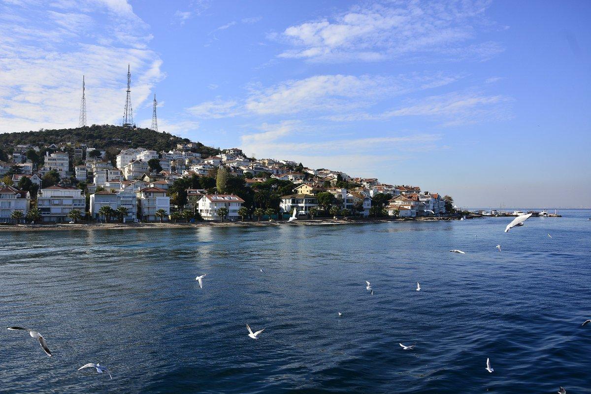 Gaviotas volando frente a la costa de una de las islas de Estambul.