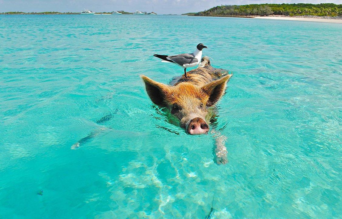 playa-de-los-cerdos.jpg