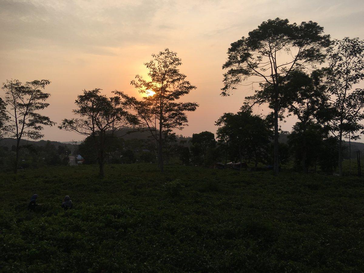 Vistas des del restaurante de la puesta de sol en la plantación de té