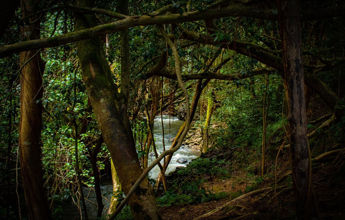 visitar-el-amazonas-en-peru.jpg