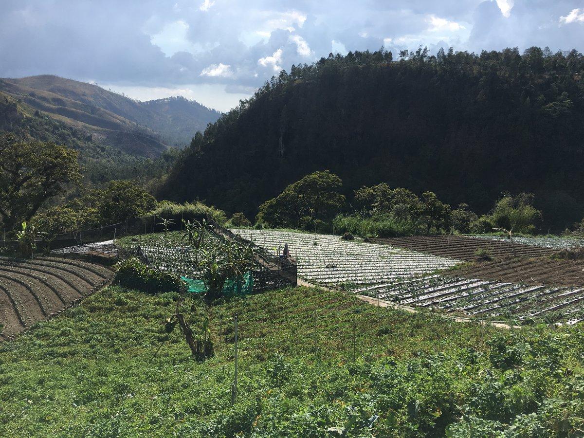 Vistas en la plantación de fresas en Surakata
